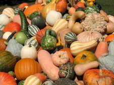 Free Harvest Stock Image - 6435471