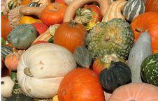 Free Harvest Royalty Free Stock Image - 6435506