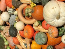 Free Harvest Stock Images - 6435534