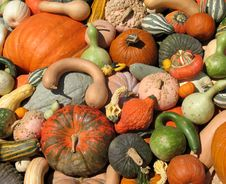 Free Harvest Stock Images - 6435544