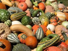 Free Harvest Stock Image - 6435551