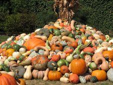 Free Harvest Royalty Free Stock Image - 6435556