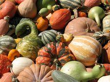 Free Harvest Stock Photos - 6435563