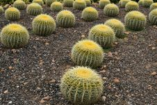 Free Prickly Landscape Stock Images - 6435564