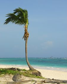 Free Bavaro Beach - Punta Cana Stock Photo - 6437280