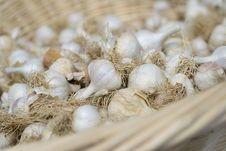 Free Garlic Royalty Free Stock Photography - 6438257