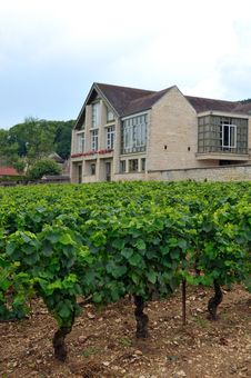 Panoramic View Of A Vineyard Stock Image