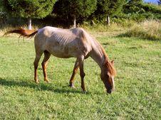 Free Horse Royalty Free Stock Photos - 6439838