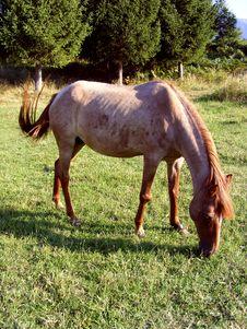 Free Horse Stock Image - 6439891