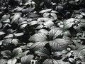 Free Dark Green Plants. Royalty Free Stock Image - 6441746