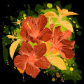 Free Watercolor - Hibiscus Flower Royalty Free Stock Photography - 6443957