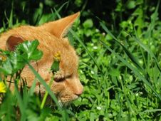 Free Cat Hunter In Grass Stock Photo - 6440400