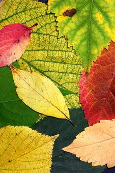 Free Autumn Pattern Stock Photography - 6441192