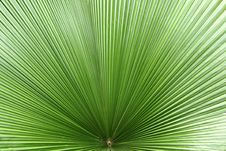 Free Green Leaf Stock Image - 6441581