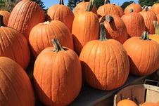 Free Pumpkins Royalty Free Stock Photo - 6441885