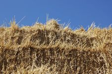 Free Hay Royalty Free Stock Photo - 6442205