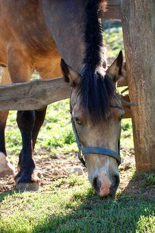 Free Horse Close Up Stock Image - 6443301