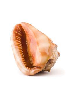 Free Sea Shell Isolated Stock Photos - 6443903