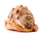 Free Sea Shell Isolated Royalty Free Stock Photography - 6443907