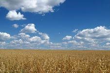 Free Golden Oat Field Over Blue Sky 2 Stock Image - 6444931