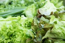 Free Greengrosery-salad Stock Photo - 6448170