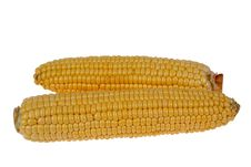 Free Corn Cob Royalty Free Stock Photo - 6449105
