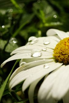 Free Flower Stock Photos - 6449833