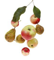 Free Fruit Royalty Free Stock Photos - 6449918