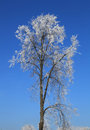 Free Frosted Tree Stock Image - 64475371