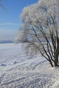Free Winter Scene Royalty Free Stock Images - 64475369