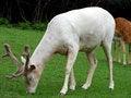 Free Deers Stock Photo - 6456080