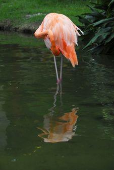 Free Flamingo Stock Images - 6450584