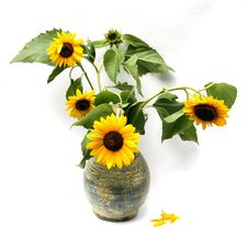 Still Life With Sunflowers Stock Photo