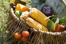 Free Basket With Vegetables Royalty Free Stock Photos - 6450748