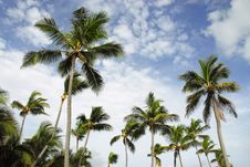 Free Coconut Palms Stock Photo - 6451260