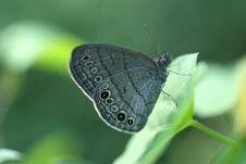 Free Moth Royalty Free Stock Photos - 6451778