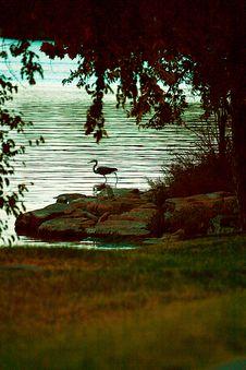 Free Blue Heron Stalking A Fish Stock Photos - 6452163