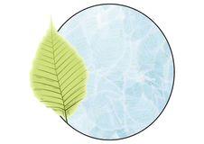 Free Green Leaf Badge Stock Photos - 6452463