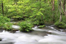 Free Nature Stock Image - 6452861