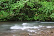 Free Nature Stock Photos - 6452983