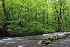 Free Nature Stock Photo - 6453060