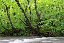 Free Nature Royalty Free Stock Photo - 6453265