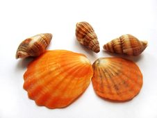 Five Cockle-shells Stock Photos