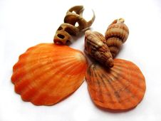 Cockle-shells Royalty Free Stock Photos