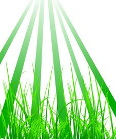 Free Green Grass In The Light Royalty Free Stock Photos - 6455648
