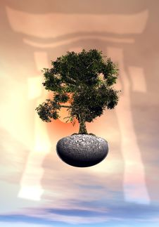 Free Bonsai Tree Royalty Free Stock Image - 6455856