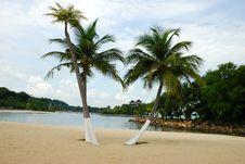 Free Tropical Beach Royalty Free Stock Photo - 6455985