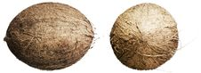 Free Coconuts Stock Image - 6456331