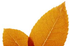 Free Autumn Leaf Stock Images - 6456584