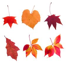 Free Composite Photo Of Various Autumn Leaves Stock Photography - 6457712
